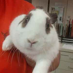 Stray Rabbit found #A-2596 pet adoption WAGS
