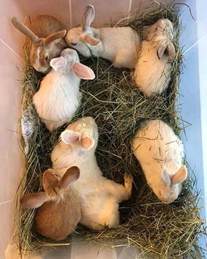 7 Rabbits found in a plastic box at Westminster Park WAGS