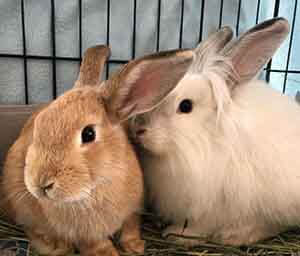 Hops and Aslan are looking for their furever home! WAGS