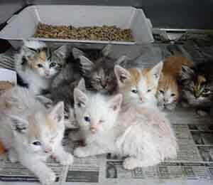 We have 11 kitties that needs foster PLEASE text to offer help WAGS