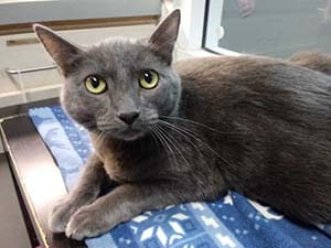 lovely cat is now adoption in WAGS