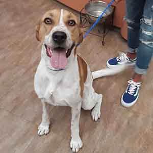 Friendly male dog found #A-2671 pet adoption WAGS