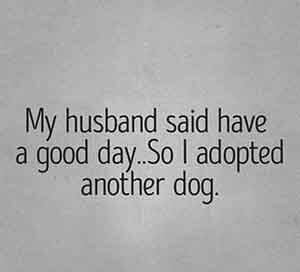 adopt another dog quote