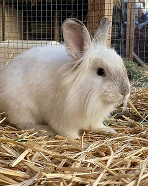 Aslan and all of his other bunny friends are still looking for their forever homes WAGS