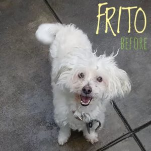 frito before groom WAGS