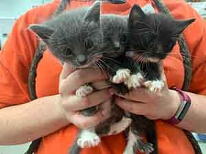 We have several litters of kittens that needs fostering. WAGS