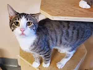 cute kitten adoption WAGS