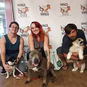 3 lovely dogs adopted at WAGS