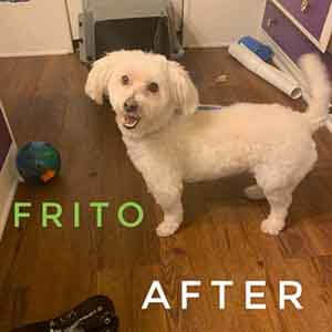 frito after groom WAGS