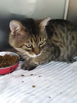 Beetle, He is FIV positive and help us find his forever home WAGS