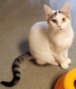 pet kitten adopt at WAGS