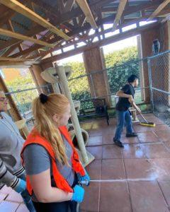 wags volunteer helping cleaning