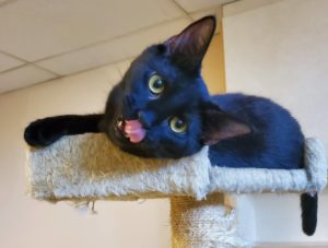 little kitten adoption for WAGS