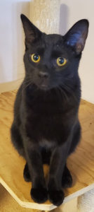 black cat is now needed a home WAGS