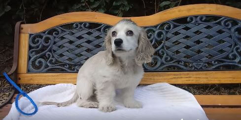 Chantilly aka Tilly wags adoption