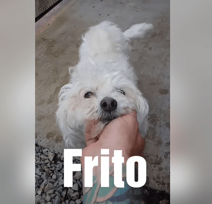 7yr old Frito is mushy, with other dogs looking for a home WAGS