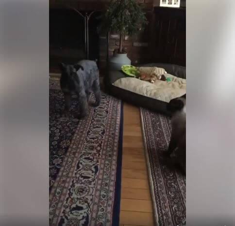 dog enjoy playing WAGS