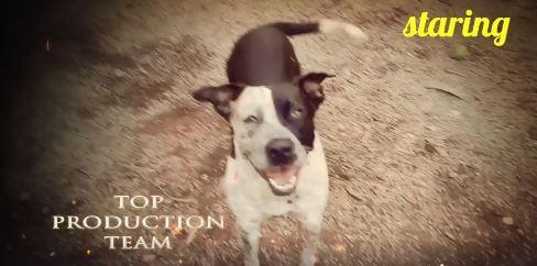 splash dog WAGS for adoption