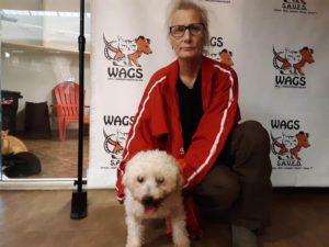 new adoption dog at wags