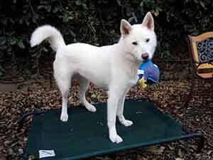 wags dog lilo happy to adopt