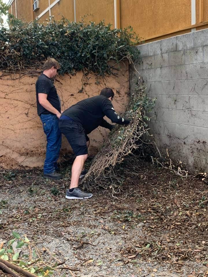 wags volunteer clean hedge