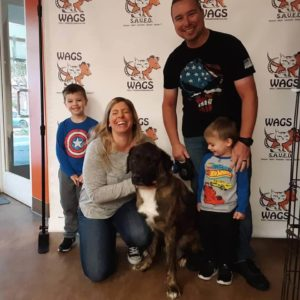 lovely family adopt a big dog at wags