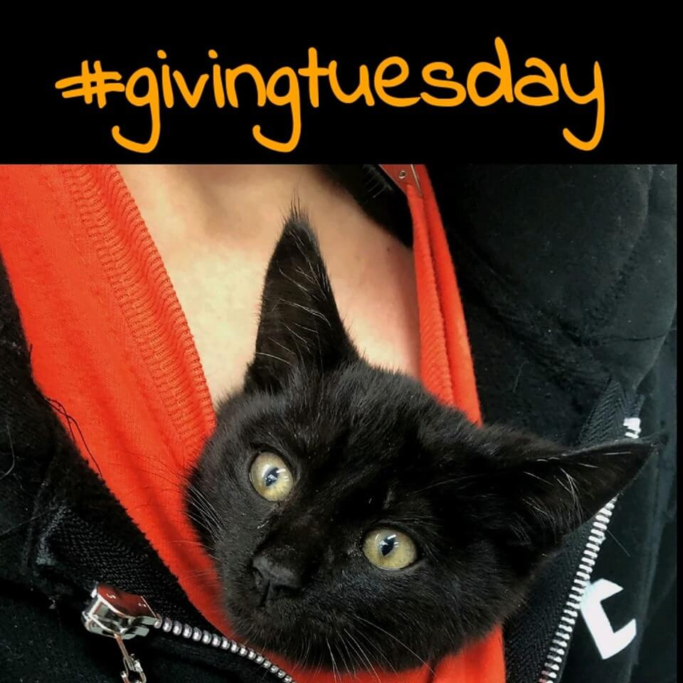 wags giving tuesday event