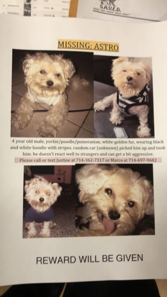 lost pet dog courtesy post