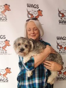 sweet lovely dog adopt at wags