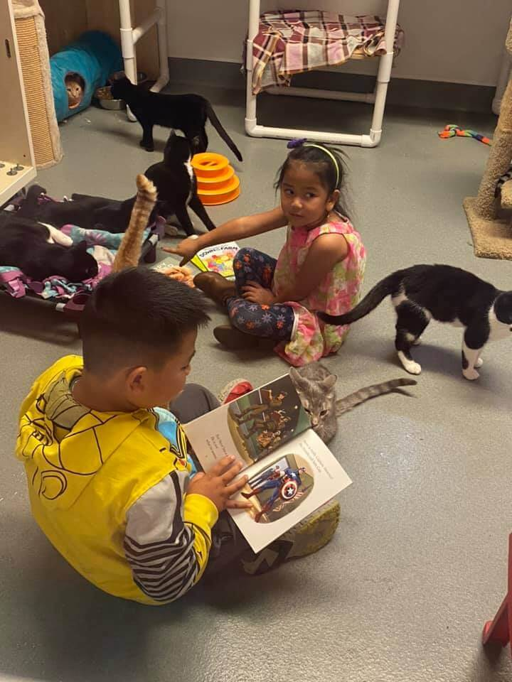 kids reading to cats at wags