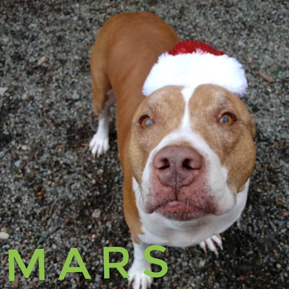 Mars is ready for Holidays