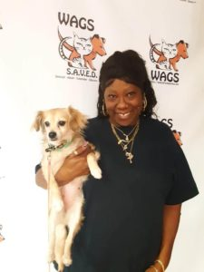 great wags dog now adopted