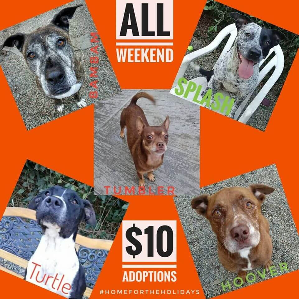 5 dogs available for adoption and this weekend - Animal ...