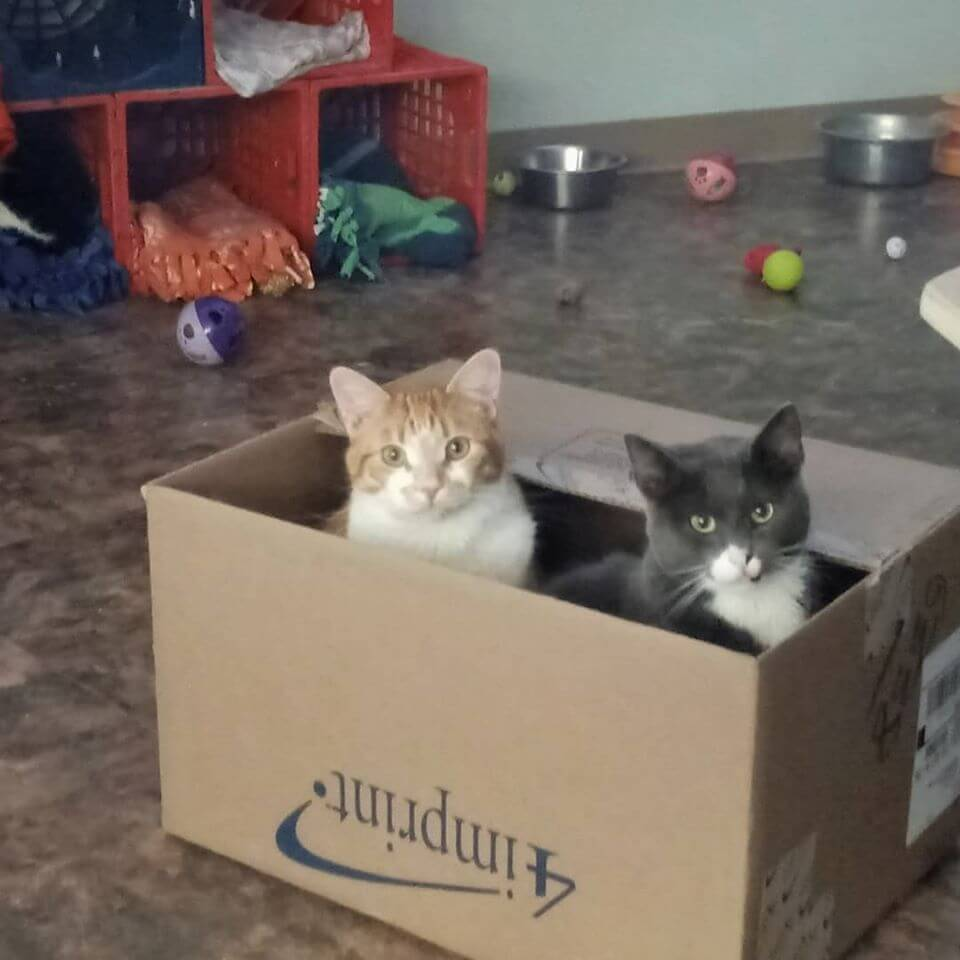 kittens peeking from box