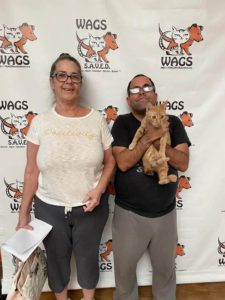 welcome smile wags cat adopted