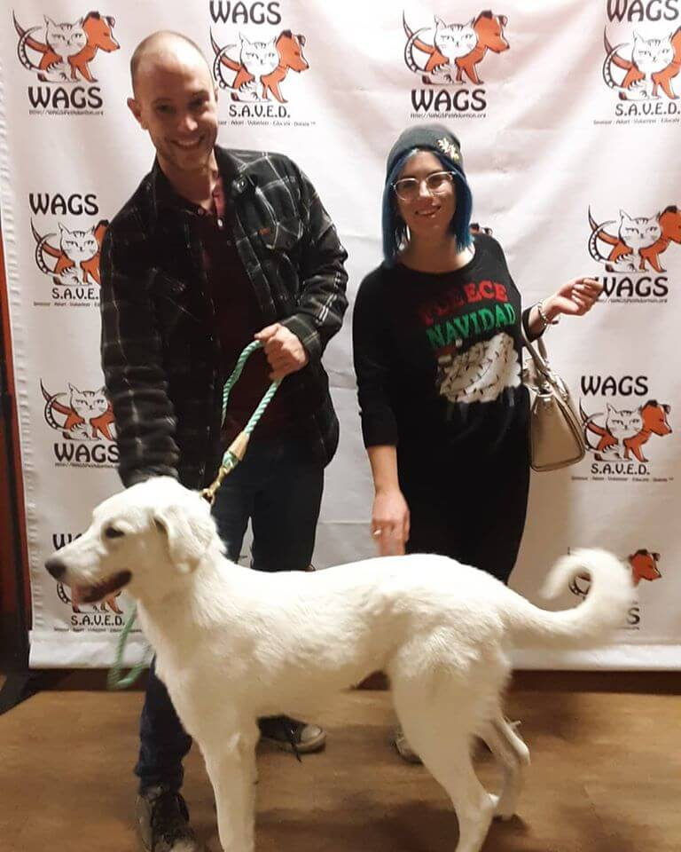 Couples holiday adopt white dog WAGS