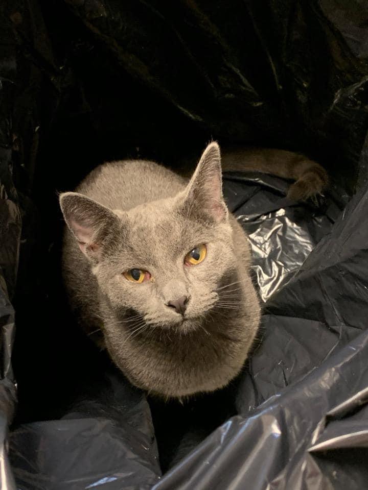 wags pet cat tbone