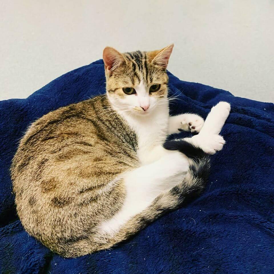 cat resting on blanket