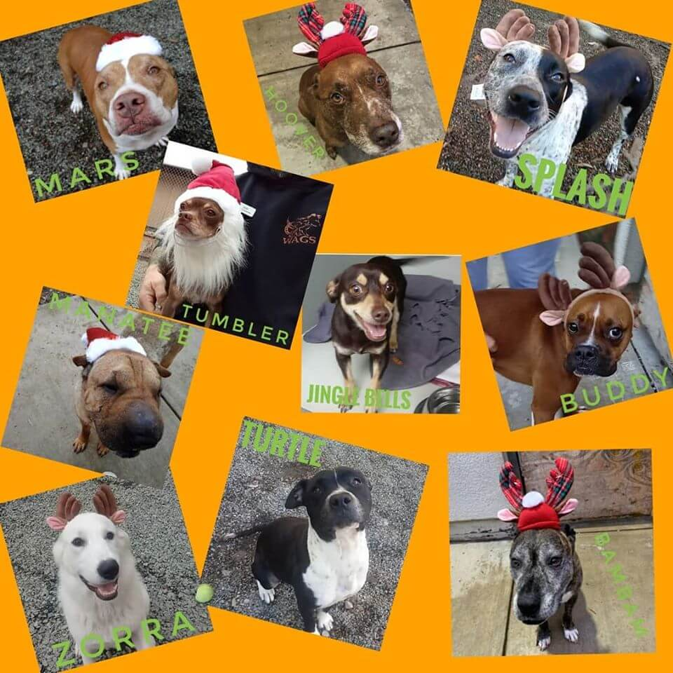 special dog adoption for special holiday WAGS