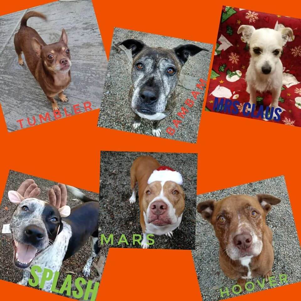 6 Adoptable left Holiday WAGS