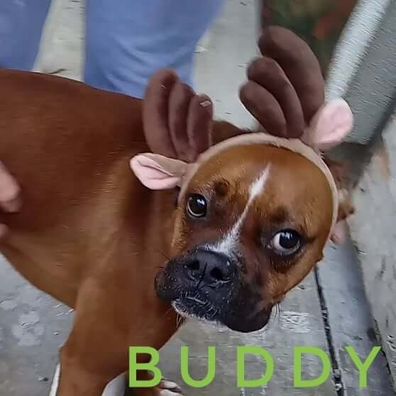 Holiday happy hour adoption event buddy wags