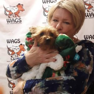 sweet little dog adopted now at wags