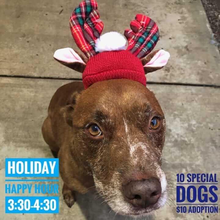 special for special adoption hour