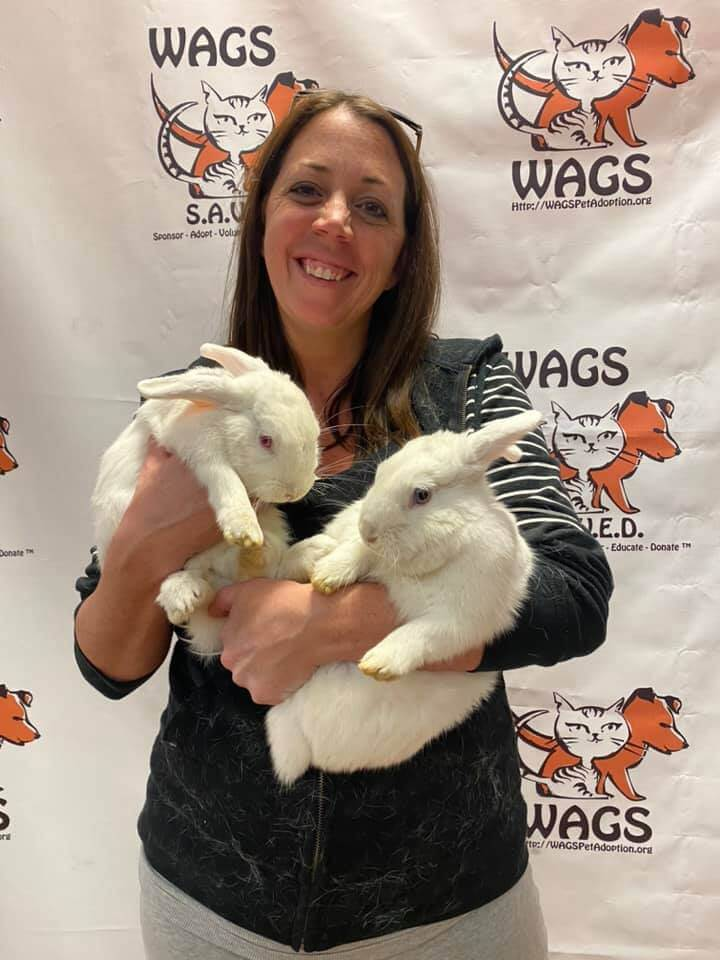two white rabbit adopted by sweet lady