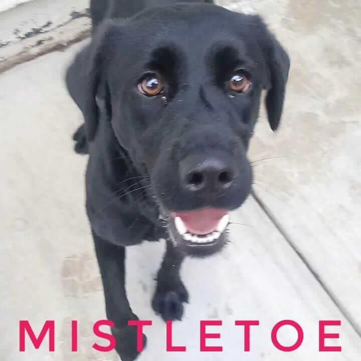 mistletoe smiles for adoption