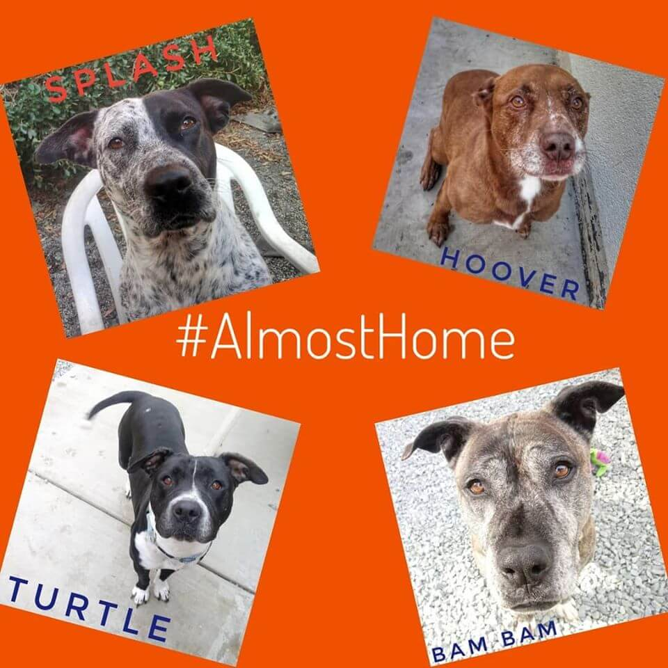 almost home dogs for adoption holidays