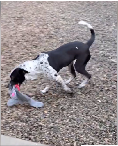shelter for animal WAGS dog black playing
