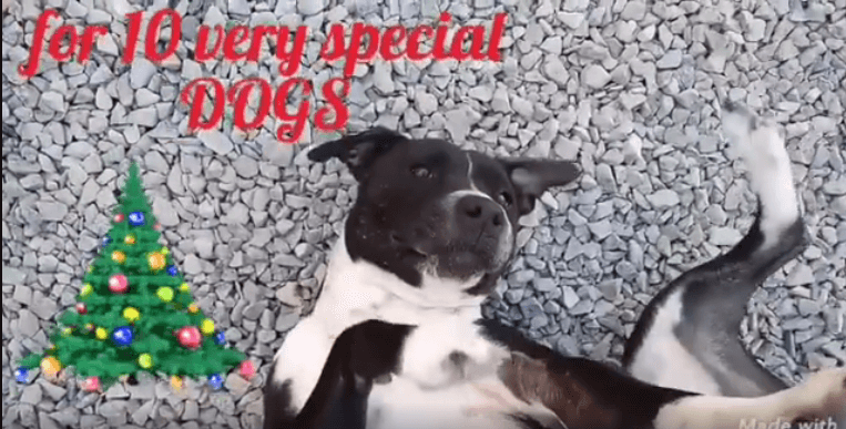 wags turtle dog special adoption