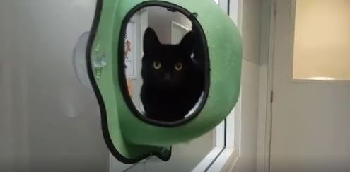 wags cute black kitten