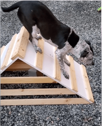 DOG first time to play with ramp
